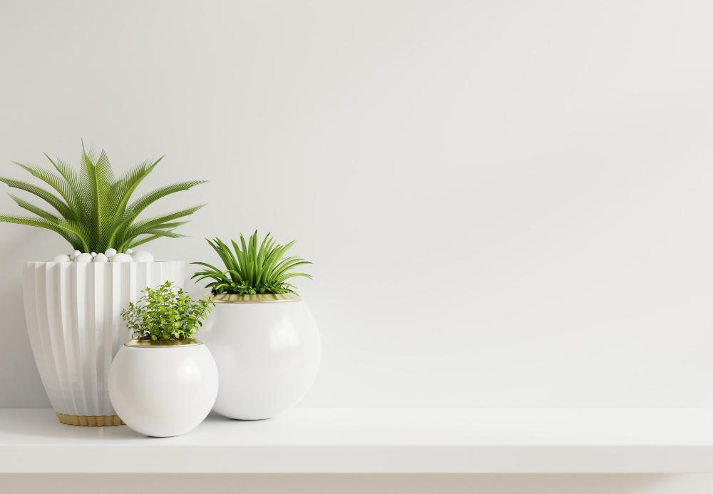 Plantes d'intérieur : les plus belles et les plus résistantes
